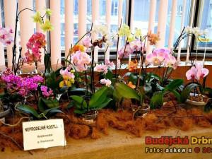 Výstava orchidejí v DK Metropol