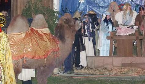 Do Živého betlému v Šindlových Dvorech přijde velbloud