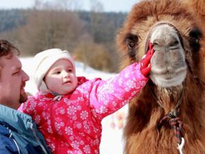 Na Lipno v sobotu dorazí velbloud Šajtan a lamák Otík