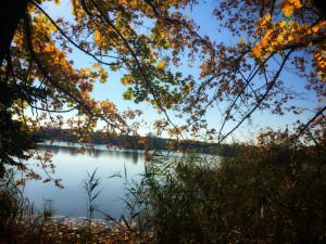 Rybník v barvách podzimu.
