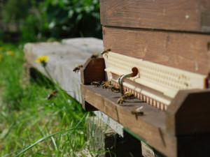 V Horním Rakousku se otevírá zemská zahradní výstava Bio.Garten.Eden Aigen-Schlägl