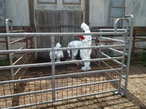 Veterinární dozor cvičil v jižních Čechách spolupráci při likvidaci nebezpečných nákaz v chovech