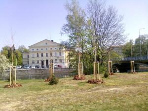 V Budějcích přibyly stromy a keře za 850 tisíc korun