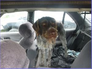 Pes zavřený v autě