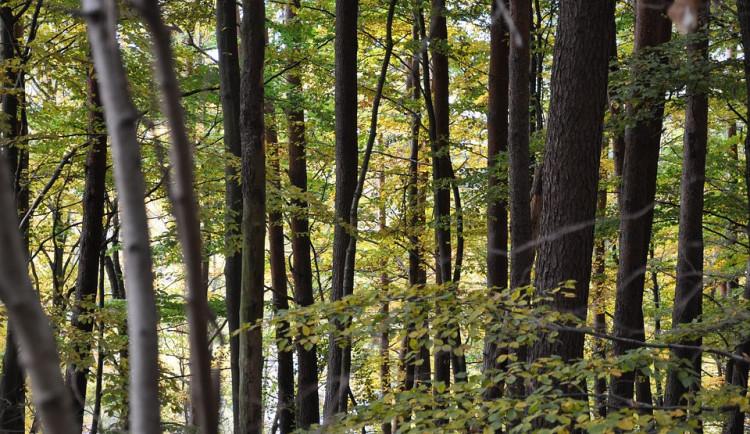 Inspekce pokutovala firmu Orlík nad Vltavou za lesní hospodaření