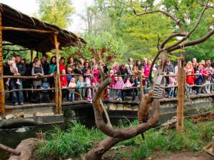 Zoo Hluboká oslaví Den zvířat, hlavním tématem bude ptactvo