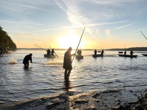 Začal výlov Rožmberka. Rybáři čekají 150 tun ryb, jako loni