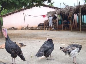Oblast Guerrero - západní Mexico