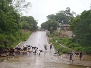 Oblast Guerrero - západní Mexiko - nahánění dobytku