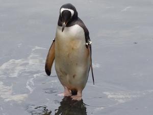 Epizoda 1 - Bergen: Tučňák v Akvarietu