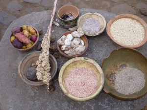 Plodiny - quinua, zanahoria andina, dehydrované brambory -chuňo