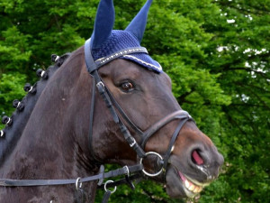 Vysmátej kůň
