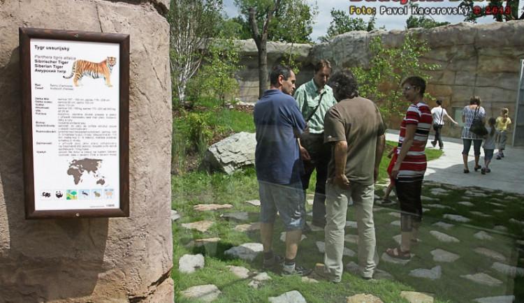 Do výběhu tygra ussurijského ještě o víkendu mohli návštěvníci
