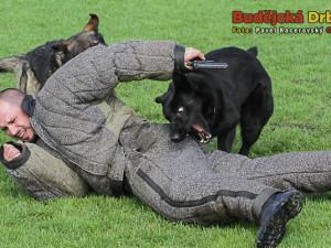 Služební psi nedali ozbrojenému pachateli šanci uniknout