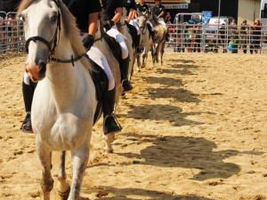Žákyně Střední školy chovu koní a jezdectví Kladruby nad Labem