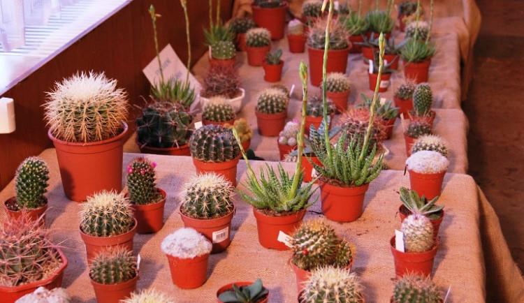 Různé druhy kaktusů nesmí chybět