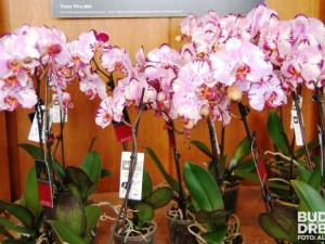 Jedna orchidej je krásná, ale ve větším počtu se dojem umocňuje
