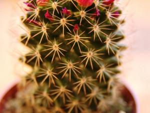 Koupit si můžete i kaktusy
