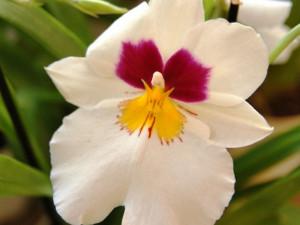 Květiny, na které je možné se dívat hodiny