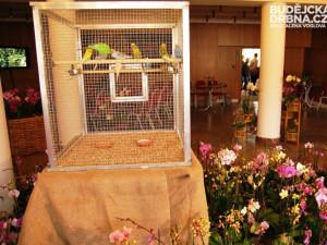 Letos poprvé uslyšíte a uvidíte i živé papoušky, kteří podtrhávají atmosféru výstavy