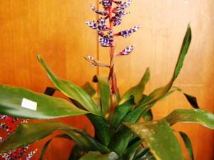 Na výstavě uvidíte známé i neznámé druhy květin