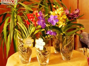 Vzácné druhy orchidejí překvapily zajímavým zbarvením
