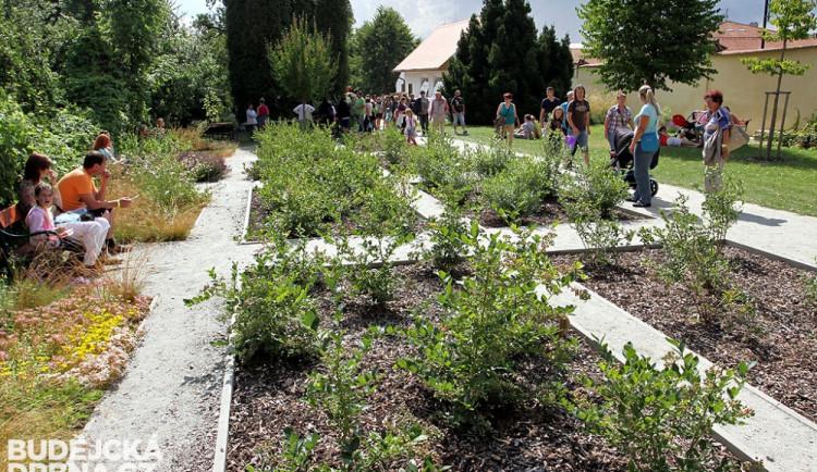 Borůvková zahrada v sousedství prelatury