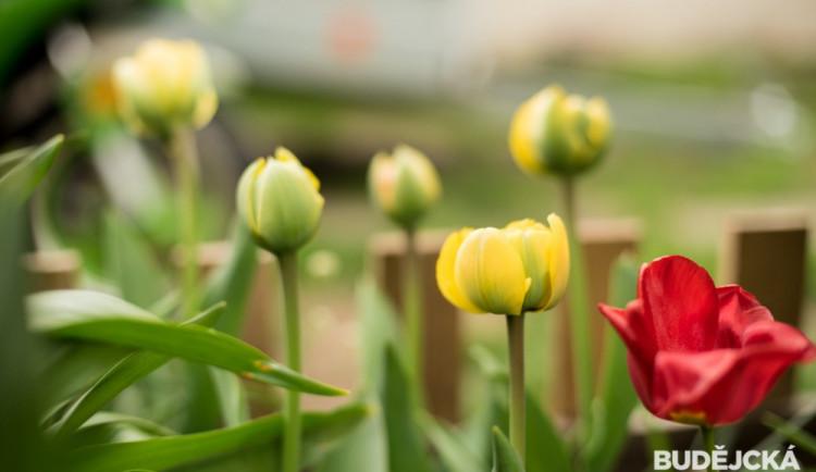 Rozkvetlé Budějce - první máj