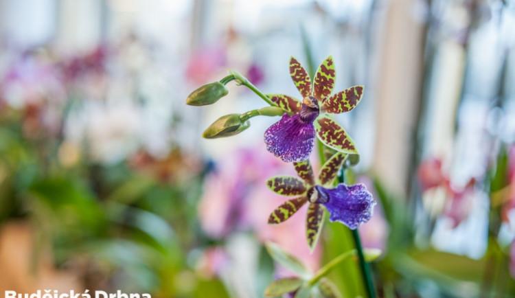 Výstava orchidejí v Metropolu