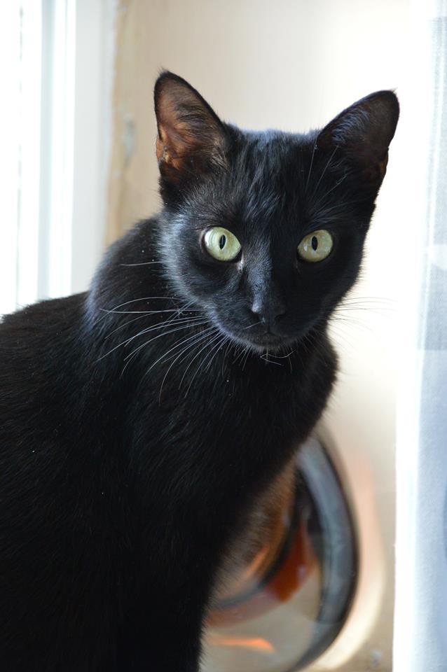 černý model kočička